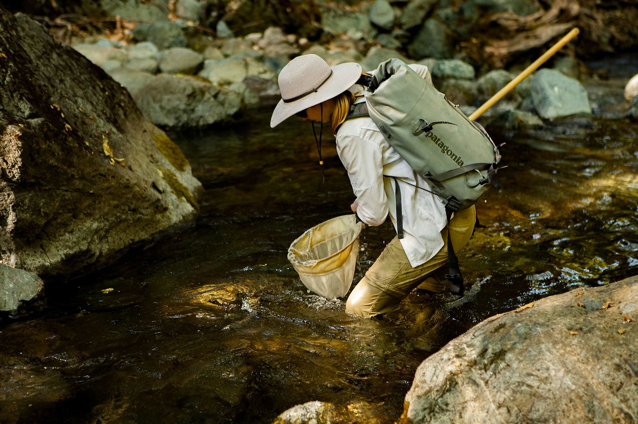 UC Davis doctoral student Tasha Thompson samples juvenile steelhead in Salmon River, California. (Mikal Jakubal photo)