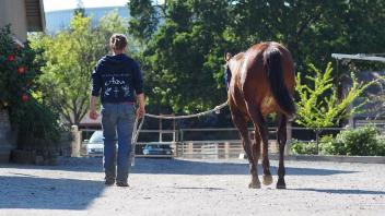There are lots of exciting internship opportunities like working at the UC Davis Horse Barn!