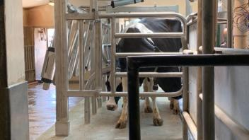 UC Davis Dairy: 4pm, first cow in!
