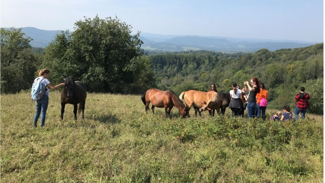 Equine Management and Welfare group in Poland